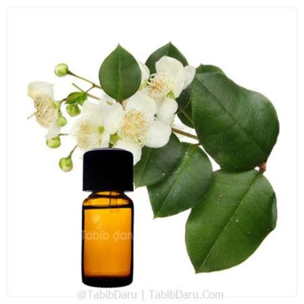 Myrtle Essential Oil+Myrtle Essential+Essential Oil+buy Myrtle Essential Oil+herbal Myrtle Essential Oil